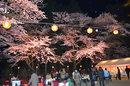 「夜桜お花見ふれあい大宴会」プラン