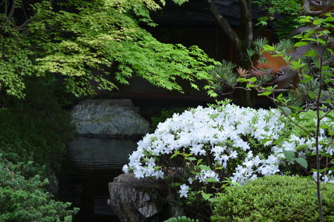 庭園の皐月(5/18)