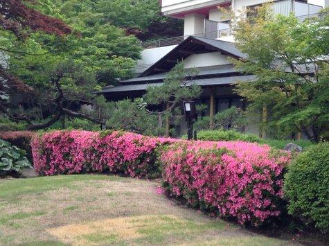 庭園の皐月(6/9)