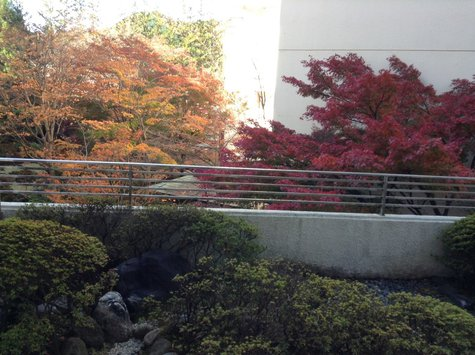 今朝の庭園(11/12)
