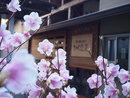 貸切風呂前の八汐つつじ?3/30