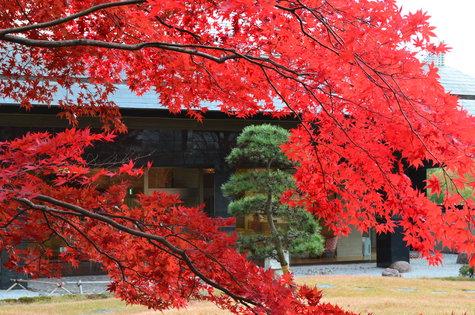 ※秋桜(こすもす)プラン。9月~11月