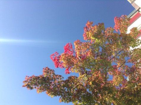 紅葉と晴天