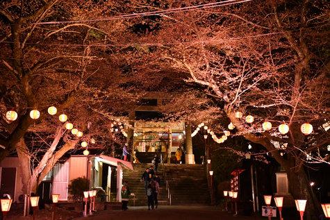 夕べ「夜桜大宴会」に行ってきました。