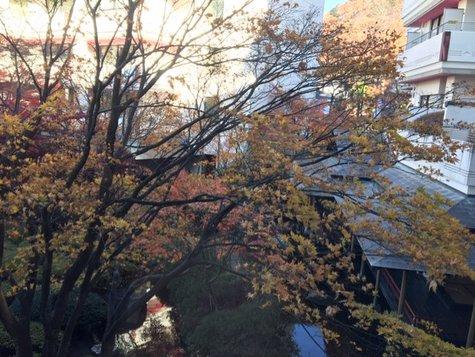夢の季:今朝の風景(11/26)