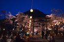 【鬼怒川温泉◆夜桜大宴会】1泊2食付:夕食は桜の下で特製お花見弁当を♪(4/4~4/12)