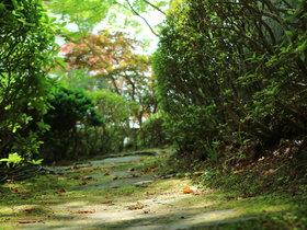 庭園 木漏れ日