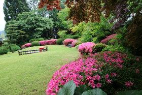 庭園 緑とさつき