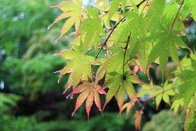 庭園 雨と緑
