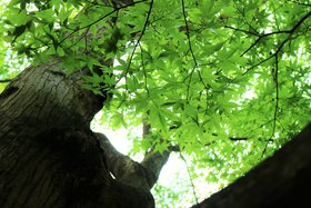 庭園 緑の木々