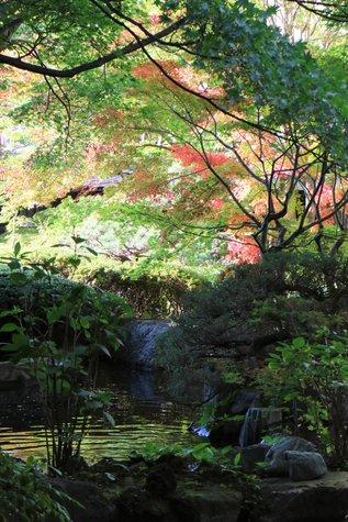 夢の季:今日の風景と日光の紅葉情報(10/25)
