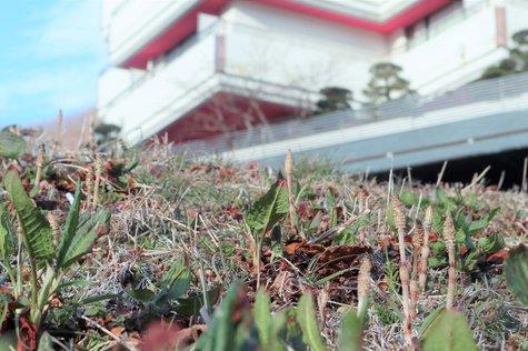 夢の季の風景から(3/14) -春の兆し-
