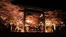 鬼怒の季の風景から(4/3) -夜桜-